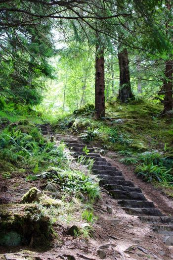 Steps in the woods, Plodda Falls, Forest Nature Tree Tree Trunk Beauty In Nature Tranquility Landscape Tranquil Scene Scenics No People Steps Scotlandsbeauty Stone Material Green Color Plodda Falls