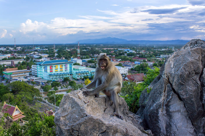 Monkey on mountain with the nature landscape background Animal Animal Fur Bay Blue Sky Cloud - Sky Island Landscape Monkey Monkeys Mountains Natural Nature No People Outdoors Popular Animal Popular Photos Sea Sea And Sky Sky Temple Thailand Top View Travel Traveling Wolfish