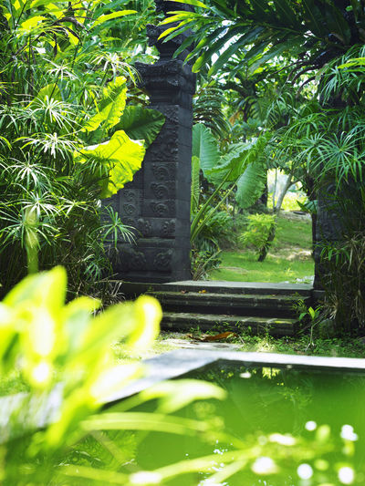 the entrance of a garden with bali style Bali Pond Beauty In Nature Close-up Day Door Entrace Fern Garden Green Color Growth Landscape Leaf Nature No People Outdoors Park Plant Tree Water