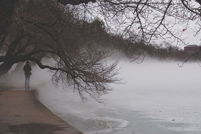 Faded Misty Steam Mist Washington DC DC Tidal Basin Rainy Days Rain Ice Weather Foggy Fog Winter Bare Tree Cold Temperature Weather Tree Outdoors Snow Branch One Person Nature Day Real People Beauty In Nature Water Full Length Sky