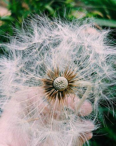 Vscocam Vsccocamphotos VSCO Nature Vscogood Goodvibes GoodTimes Good Love Photo Photographers Instagram Instapic Instagood Baudefotos