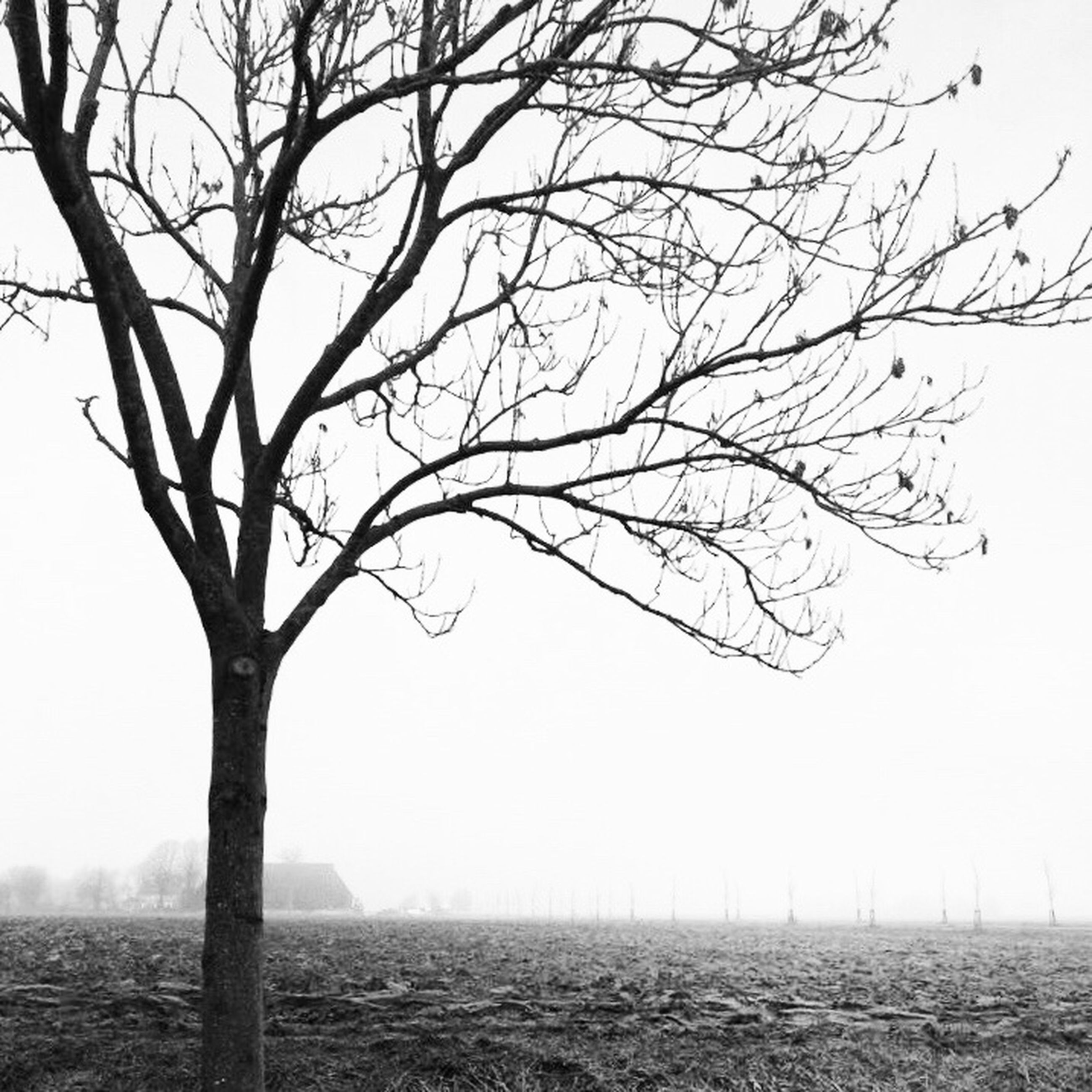 bare tree, tree, landscape, branch, tranquility, lone, nature, clear sky, isolated, tranquil scene, beauty in nature, outdoors, scenics, day, field, tree trunk, no people, sky
