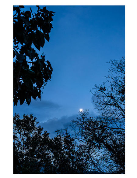 Tree Low Angle View Nature Growth Sky Branch No People Beauty In Nature Blue Outdoors Day Star - Space Clear Sky Fragility Freshness Close-up