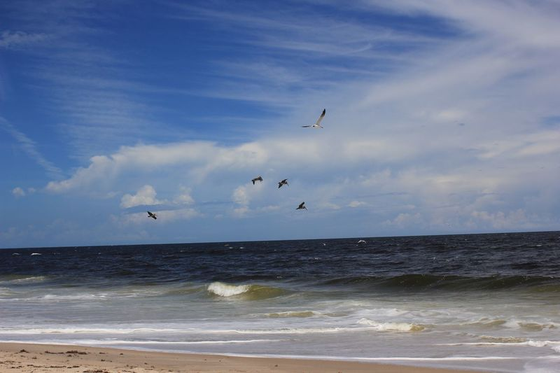 Birds & bait inshore Seascape Flock Of Birds Beach Photography Seashore Melbourne Beach, FL Melbourne Florida Horizon Over Water Shore Beach Blue Tranquil Scene
