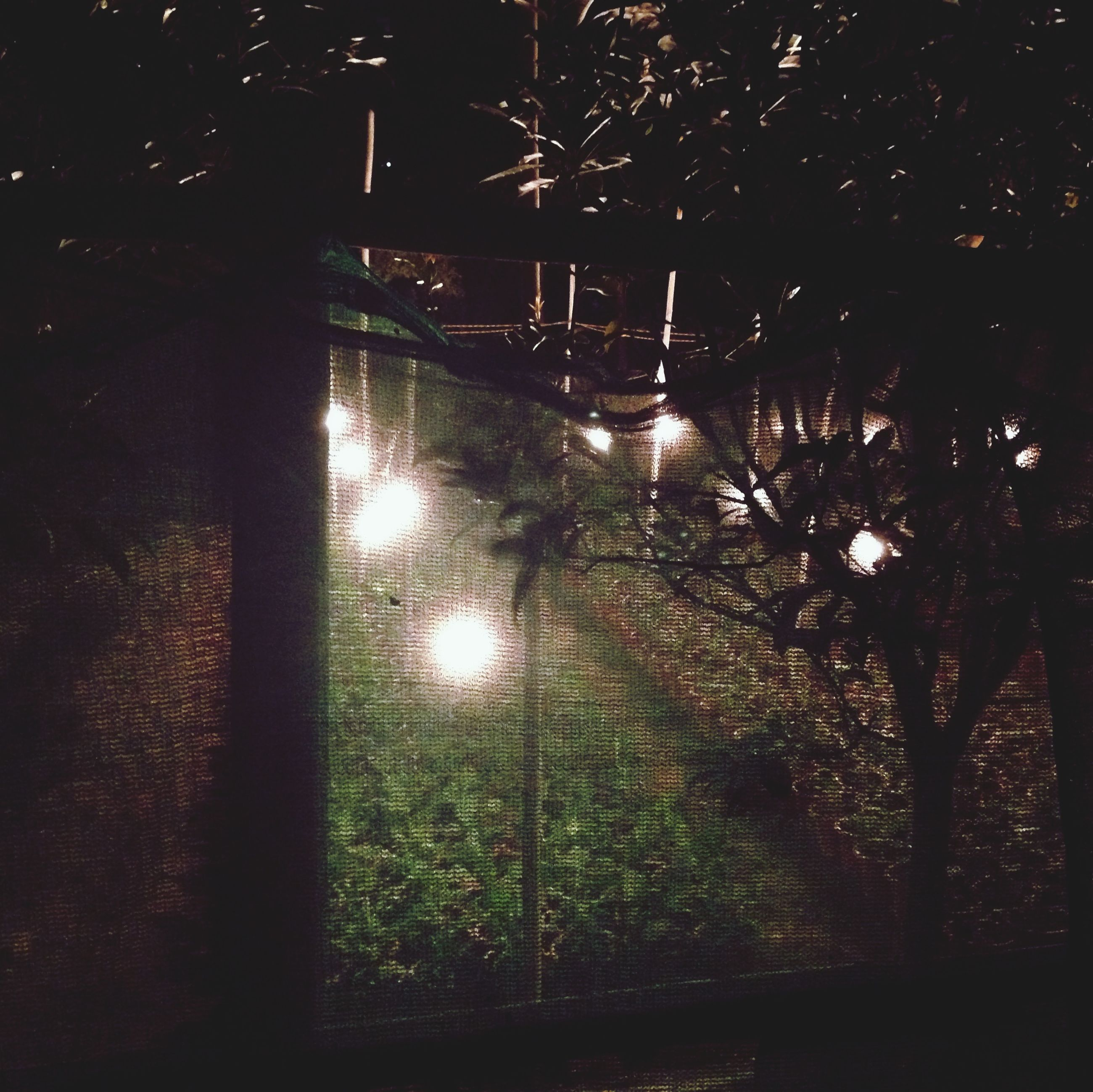 night, illuminated, tree, water, reflection, dark, silhouette, tranquility, growth, nature, tranquil scene, no people, lighting equipment, outdoors, grass, glowing, street light, plant, light - natural phenomenon, branch