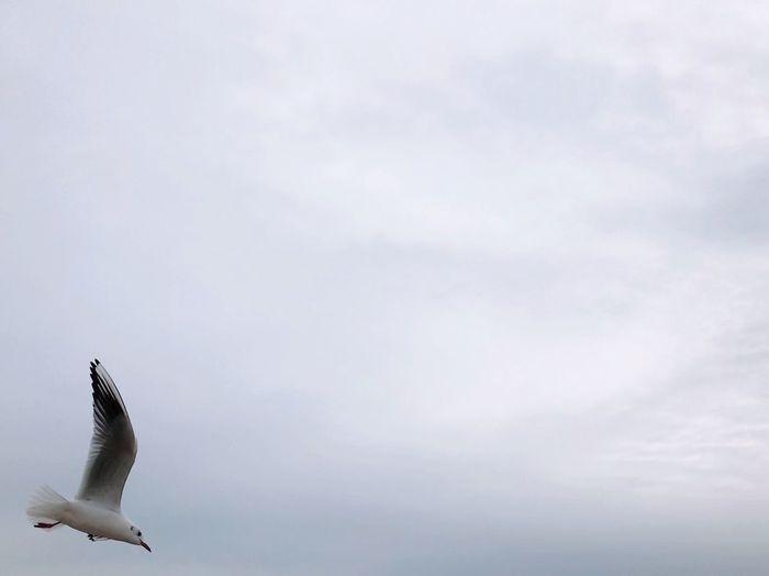 Seagull Cloud -