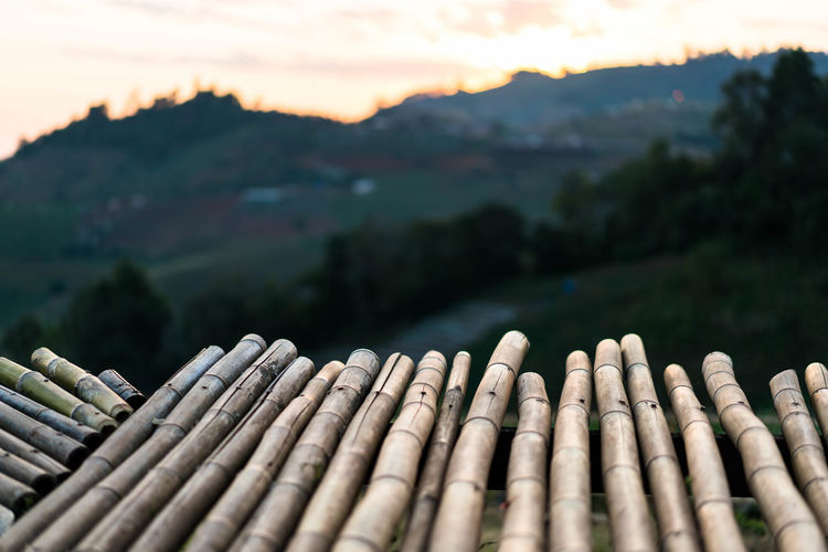 Close-up of bamboo on mountain against sky