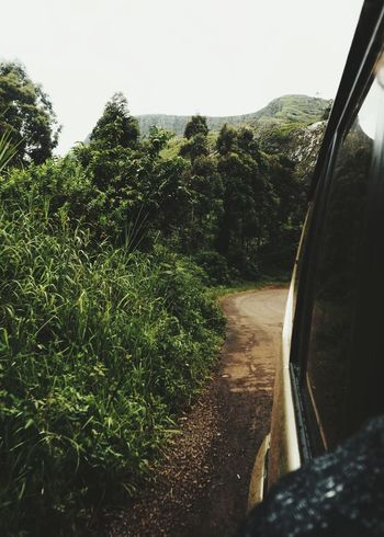 in the mountains Jeep Trek Trekking Truck Africa Mountain Rainforest Adventure Summer Road Tripping Tree Water Sky Rainy Season Rainfall Monsoon Tropical Rainforest Plant Life Growing Puddle