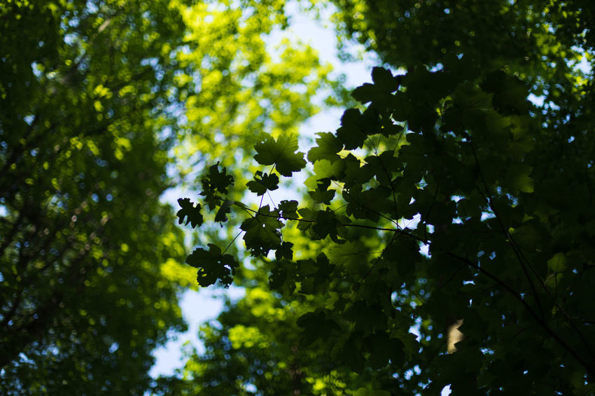green roof Relief Beauty In Nature Branch Day Focus On Foreground Freshness Green Color Growth Heat Leaf Low Angle View Nature No People Outdoors Plant Plant Part Selective Focus Sky Summer Sunlight Tranquility Tree Twig