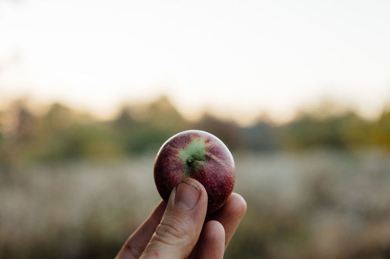 Close-Up Of Hand Holding Apple Against Sky