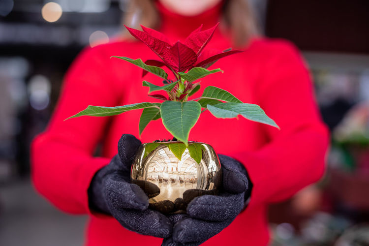 Close-up of woman holding red plant