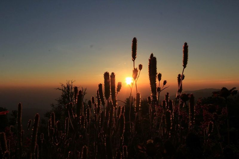 Cactus plants against sky during sunset