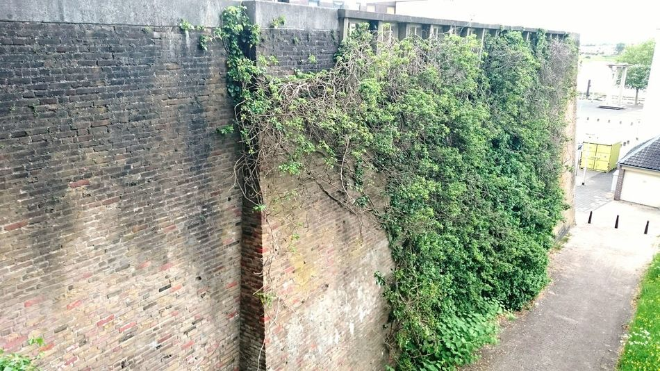Outdoors See What I See Urban Geometry Wall Green Leaves