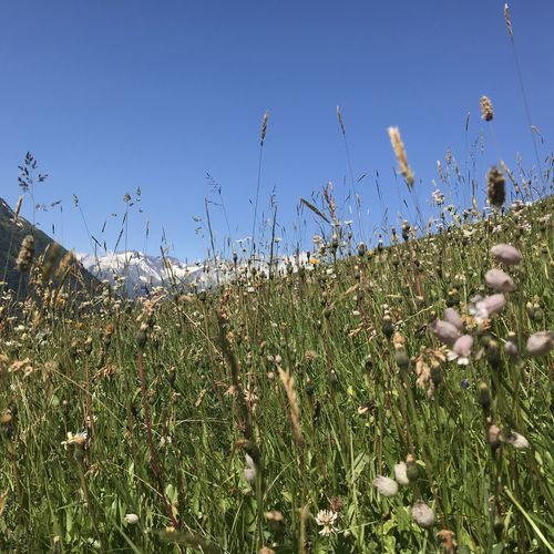 Lowangle Smartphonephotography Plant Growth Sky Field Nature Flower Land Landscape Outdoors Wildflower Tranquil Scene No People Flowering Plant Beauty In Nature