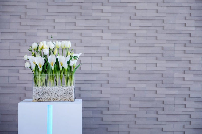 White lilies Calla in vase. Calla Lily Green Isolated Lily Modern Vase Backgrounds Bouquet Brick Wall Decoration Decorations Floral Flower Flower Arrangement Flower Head Flowering Plant Freshness Glass Lilies Petal Three Quarter Length Wall Wall - Building Feature White White Color