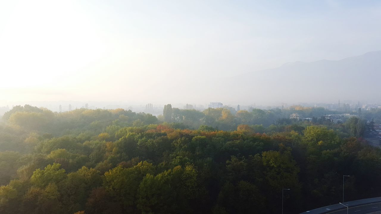 tree, nature, no people, fog, beauty in nature, outdoors, tranquility, sky, day, scenics, mountain, city, architecture, cityscape