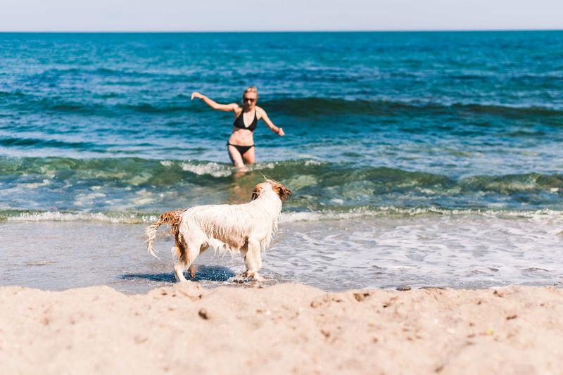 Full length of a dog on beach