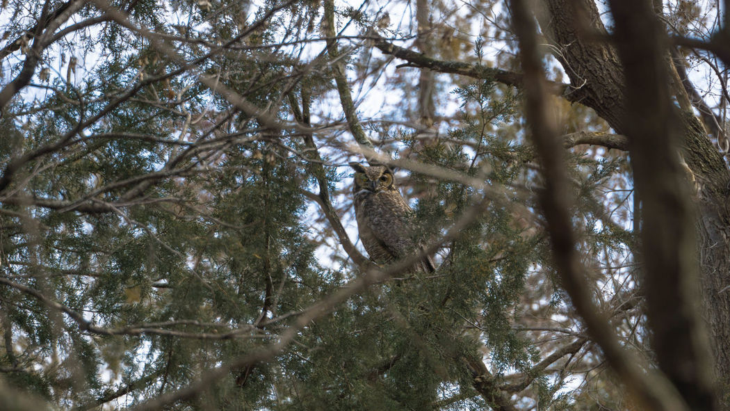 I see you! Animals In The Wild Owl Birds Tree Forest Branch Sky Tree Area