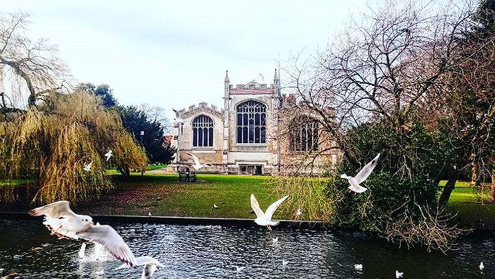 Another shot of birds near the water and St Mary's chuch, Hitchin.. Birds Stmarys Stmaryschurch Church Hitchin Hertfordshire Winter December Trees Water Flyingbirds RiverHiz Picturesque Picoftheday ICAN Sony Sonyxperia XperiaZ3