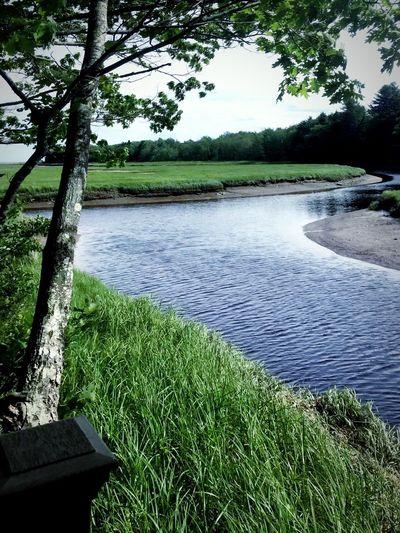 Nature Maine