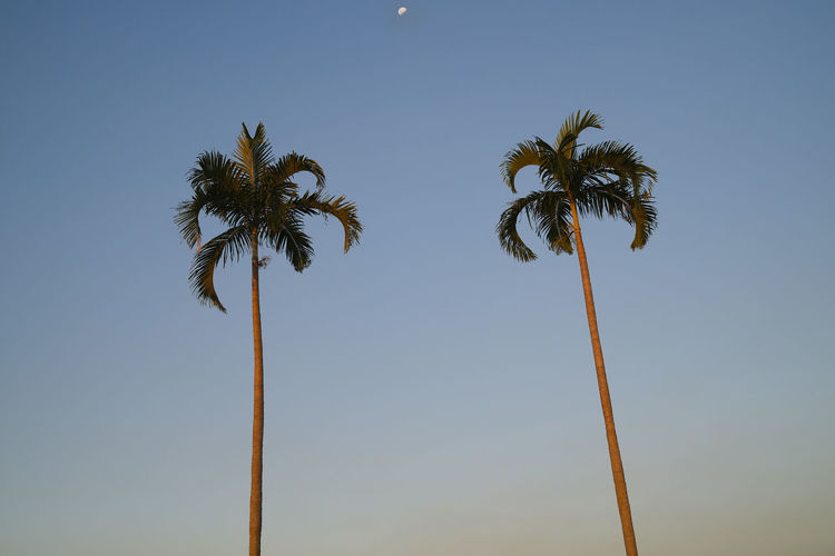Low angle view of coconut palm tree and moon against sky