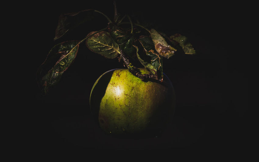 A single organic apple hangs lit by a shaft of morning sunlight against a dark black background Still Life Photography Apple Black Background Close-up Copy Space Cut Out Food Food And Drink Fresh Freshness Fruit Green Color Healthy Eating Juicy Leaf No People Organic Organic Food Plant Plant Part Single Object Still Life Studio Shot Vegetable Wellbeing HUAWEI Photo Award: After Dark