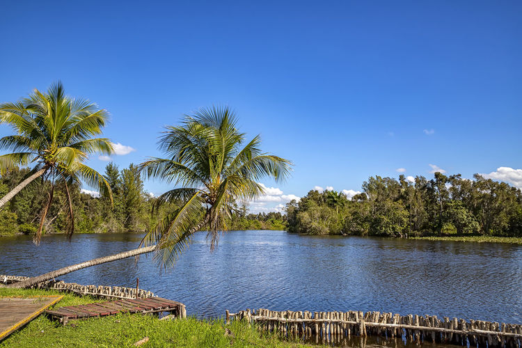 Palm trees by lake against clear blue sky