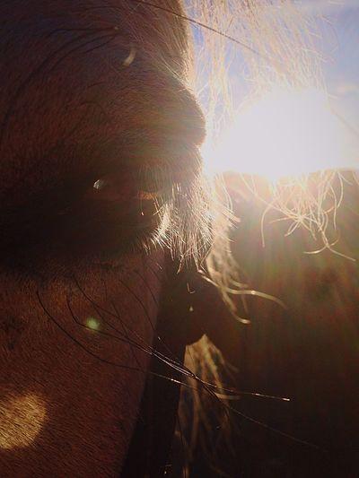 Glitch Vrackie Highland Pony