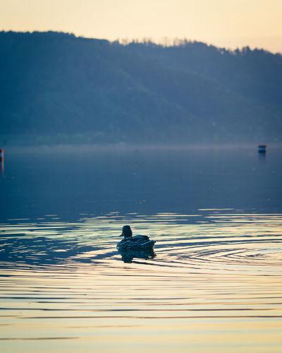 View of bird swimming in lake