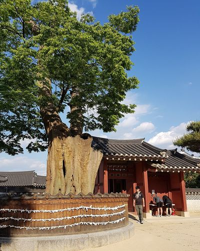 Hwaseong Temporary Palace 1789-1790 Suwon_streetphotography Streetphotography My Son Tripwithsonmay2017 Korean History Korean Culture Zelkova Tree Six Centuries Old 600 Years Old Tree Architecture