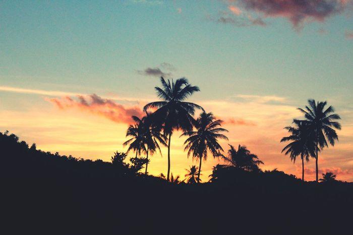 Sunset Palmtrees Palm Tree Colorful Sky Bahia Imbassai Brazil Nature