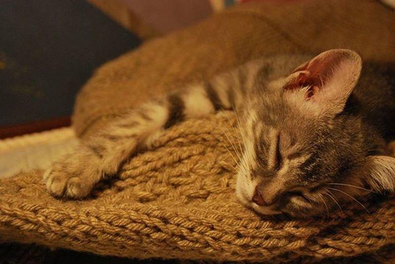 Buenas noches linda Merlina Baby Cat Cute Beautiful Sweet Lovely Sleeping Bed Photo Photocat Pic Instaphoto Instapic Instacute