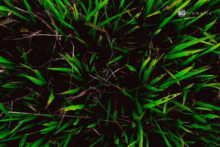 Greenology #grass #nature #wild #life #livinlife Nature Canon India Outdoors #seasons  #green Black Background Backgrounds Full Frame Star - Space Abstract Science Close-up Green Color Blooming