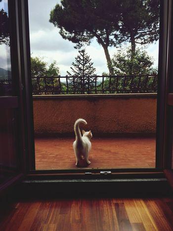 Window Indoors  Window Sill Home Interior Animal Themes Day No People Mammal