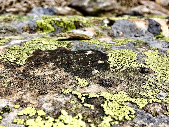 Lichen Lichen Stone Green Kärnten Carinthia Austria Reißeck