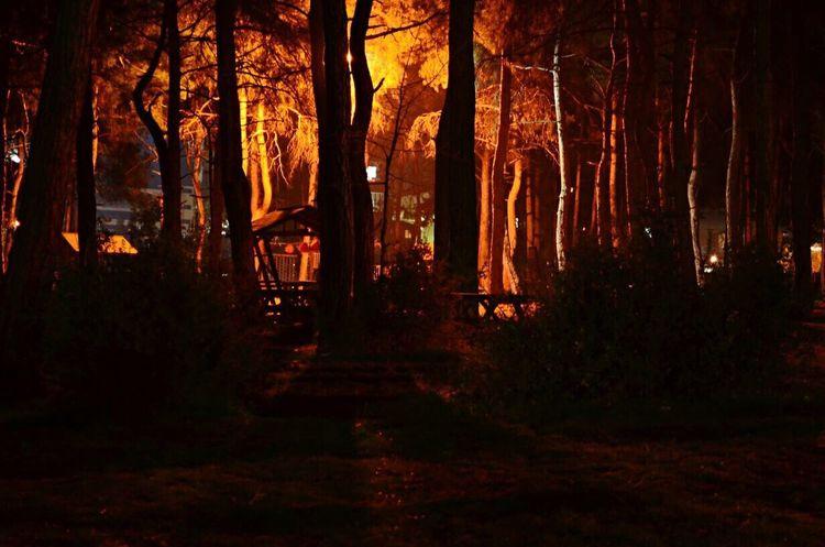 Nature Tree Autumn No People Illuminated Beauty In Nature Outdoors Sunset Night