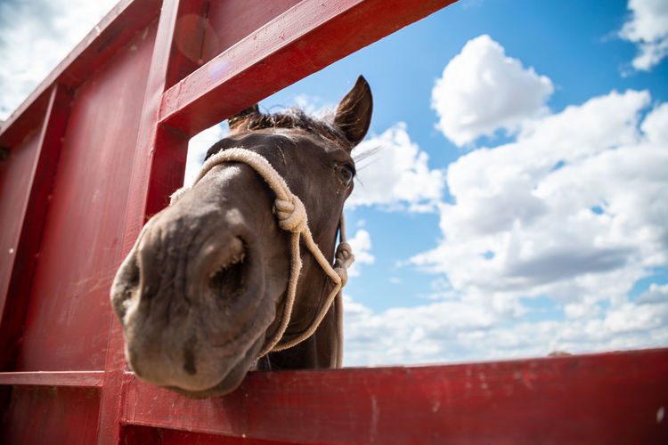 Low angle view of horse in stable