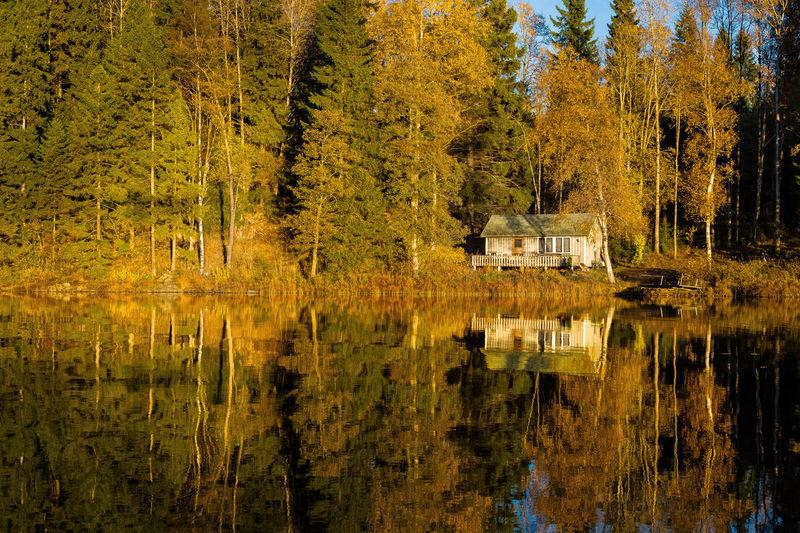 Autumn In Swe Autumn Lake Dalsland Fishing Lake Madsjö Madsjön No People Outdoors RolandAIRA Sweden Swedish Lake Tranquility Trees Reflecting In Wat Trees Reflecting On Water Yellow Tree