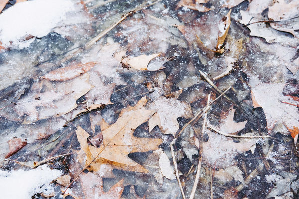Ice Winter Backgrounds Close-up Cold Day Food Freshness Full Frame Leaf Nature No People Outdoors