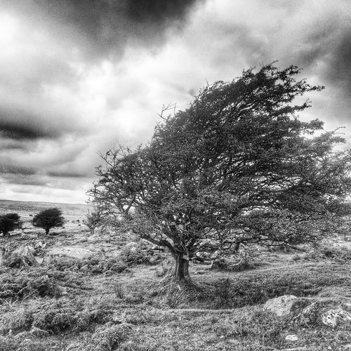 Bare Tree Beauty In Nature Blackandwhite Cloud Cloud - Sky Cloudy Day Field Grass Grassy Growth Landscape Nature No People Non-urban Scene Outdoors Scenics Sky Tranquil Scene Tranquility Tree