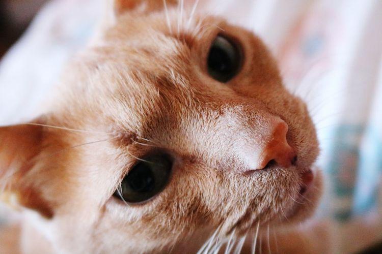 Tilu Cat Cats