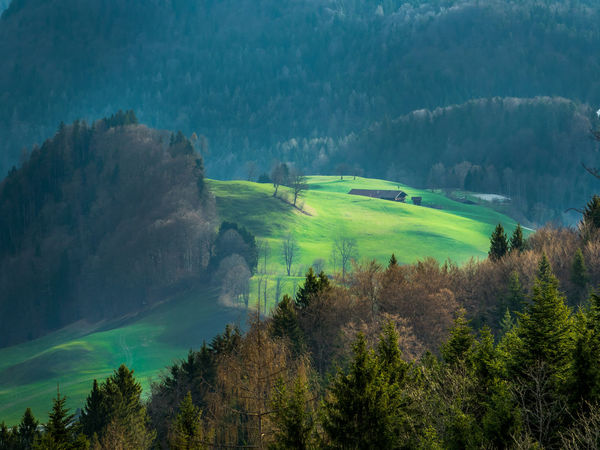 Austria EyeEm Best Shots EyeEm Nature Lover Alps Beauty In Nature Coniferous Tree Day Environment Field Forest Green Color Growth Idyllic Land Landscape Mountain Nature No People Outdoors Pine Woodland Plant Scenics - Nature Tranquil Scene Tranquility Tree