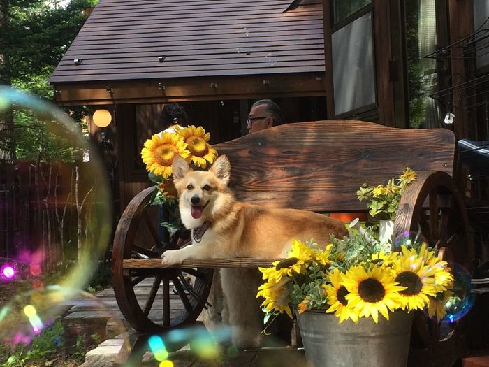 View of a dog in flower pot