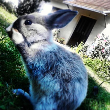Malena Little Bunny Srecica My Happines <3 Animal Photography