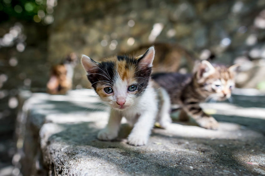 Animal Animal Themes Cat Day Domestic Domestic Animals Domestic Cat Feline Focus On Foreground Kitten Looking At Camera Mammal No People One Animal Pets Portrait Vertebrate Whisker
