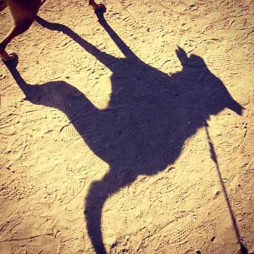 Karma's Shadow