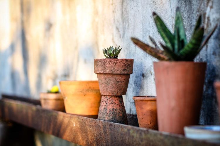 Plant pots Plantpot Succulent Plant Succulents Terracotta No People Potted Plant Outdoors Flower Pot Growth