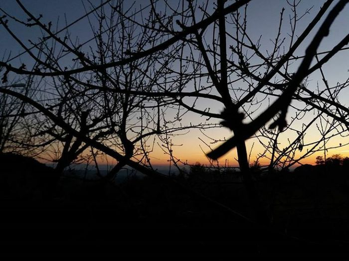 """"""" First Eyeem Photo Nature_perfection Trees Sunset Sunset And Trees Naturelovers Beauty In Nature Sky"""