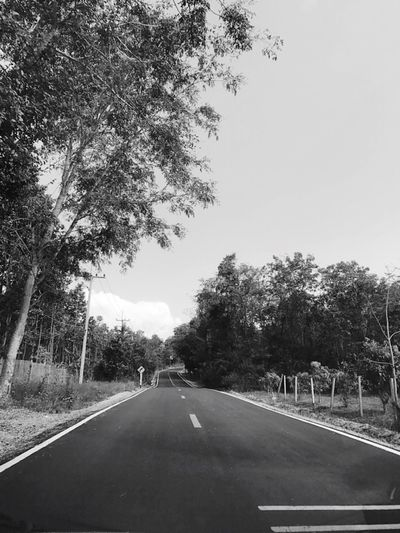 Tree The Way Forward Road Transportation Diminishing Perspective Land Vehicle Empty Mode Of Transport Day Car Long Nature Clear Sky Outdoors No People Sky Beauty In Nature EyeEmNewHere Weekend Activities Freshness EyeEm Nature Lover Landscape Car Interior Beauty In Nature Nature