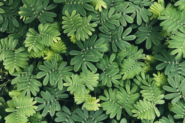Sensitive Green